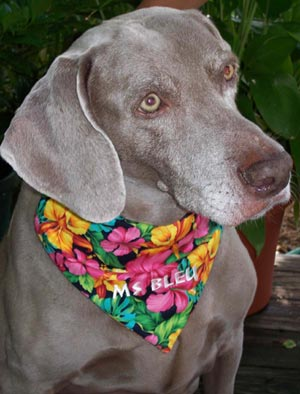Persoalized Dog Bandanas Coconut Retriever Doggie Duds